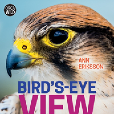 Bird's Eye View (2020)